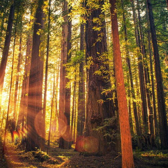 How to Visit Redwood National Park