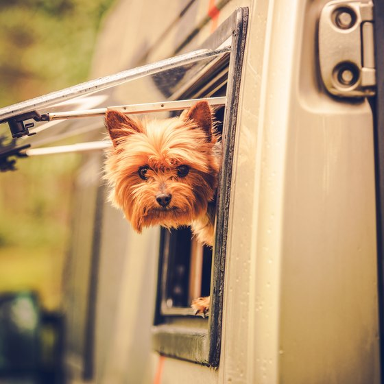 Pet Friendly RV Parks in Florida