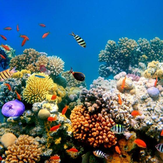 Coral Reefs & Injuries To People