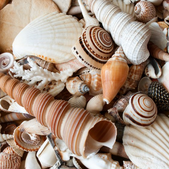 Seashell Hunting at Myrtle Beach, South Carolina