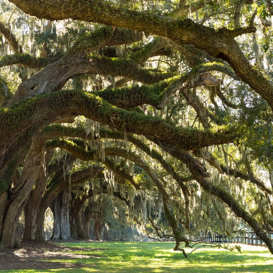 Plantation Tours in Natchitoches, Louisiana