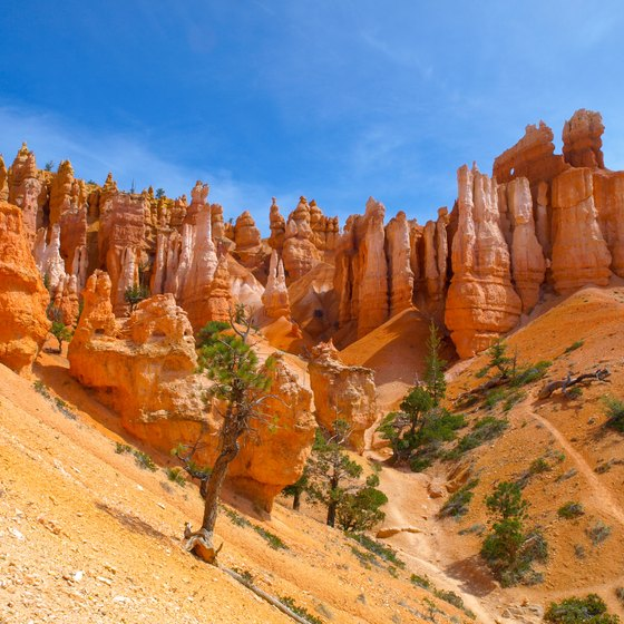 Bryce Canyon & Zion National Park Tours