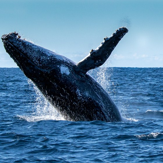 How to Whale Watch in Myrtle Beach, South Carolina