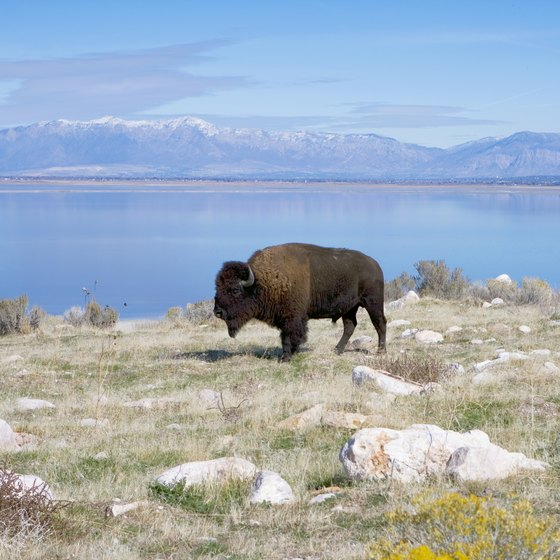 What Is There to Do at Antelope Island, Utah?