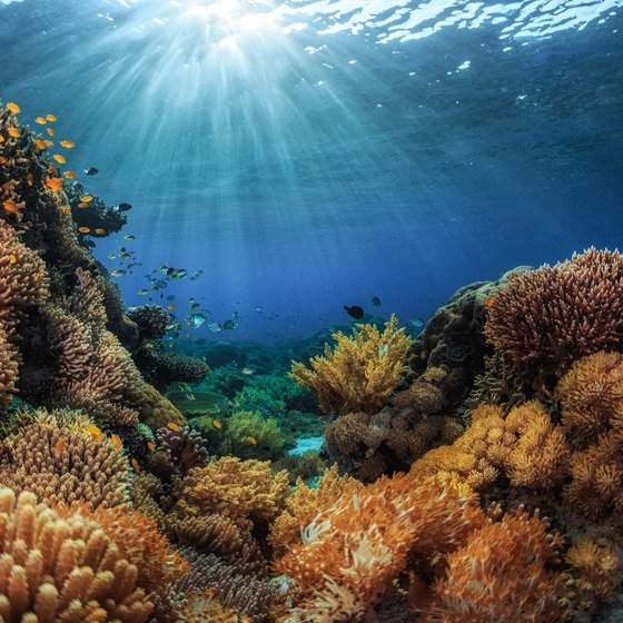 Factors Affecting Coral Reefs