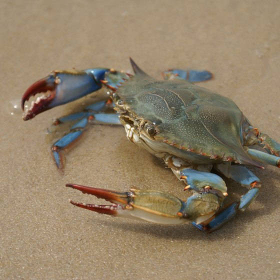 Where Can You Get Blue Crabs in Myrtle Beach?