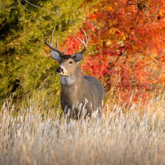 Minnesota Deer Hunting Regulations