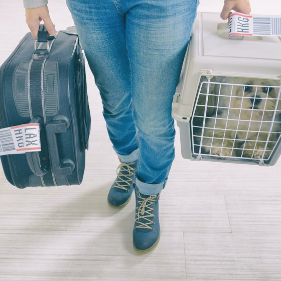 What Documents Do I Need for My Emotional Support Animal on a Plane