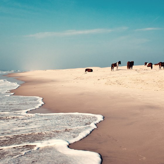 How to Plan a Vacation at Assateague Island, Virginia