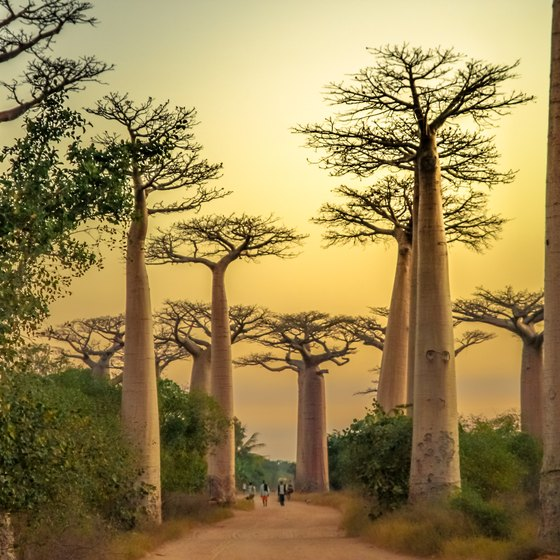 What Are Famous Landmarks: Famous Landmarks In Madagascar