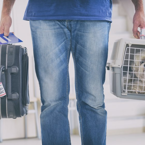 Airline Requirements for a Pet Carrier
