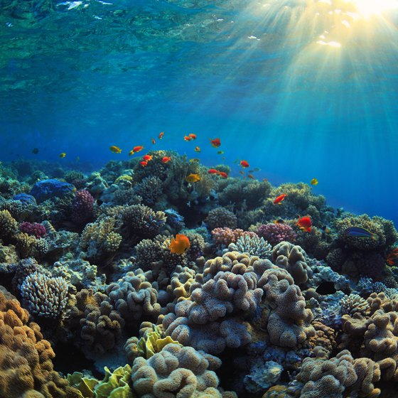 Plants That Live In The Coral Reefs