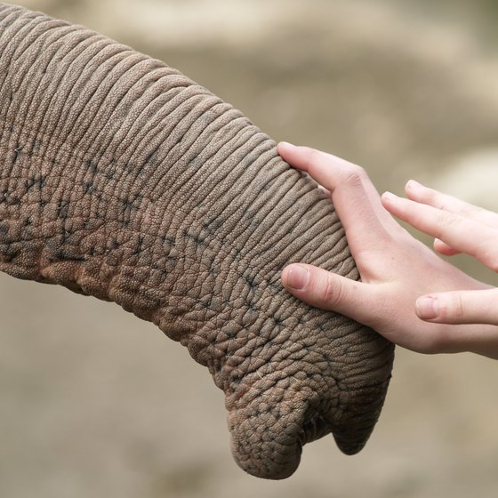 Petting Zoos With Elephants in Houston