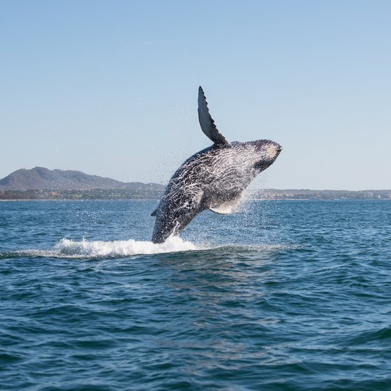 Whale Watching Tours in Boston