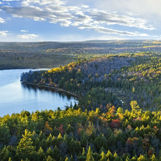 Fun Things to Do in the Boreal Forest