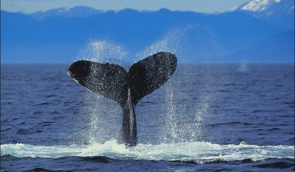 What Is a Baby Whale Called?