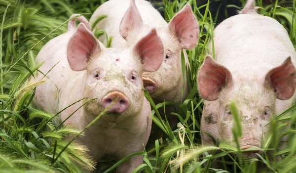 Farm animals animals for How to get rid of fish odor syndrome