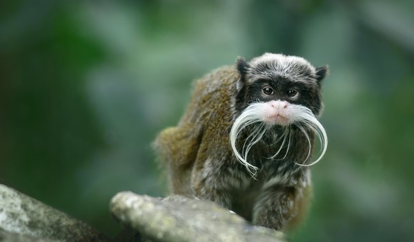 The Habitat of the Mustache Monkey