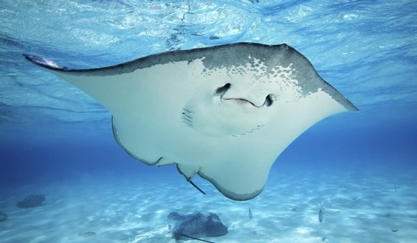 How Stingrays Hide