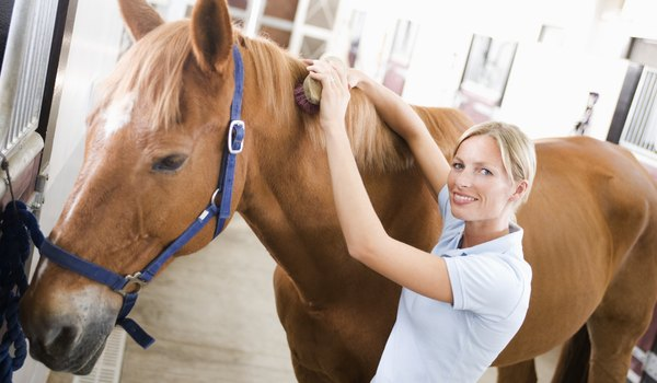 The Common Cold in Horses