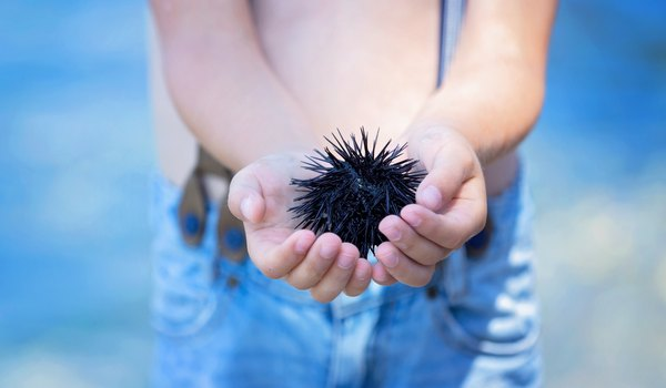 Sea Urchin Information for Kids