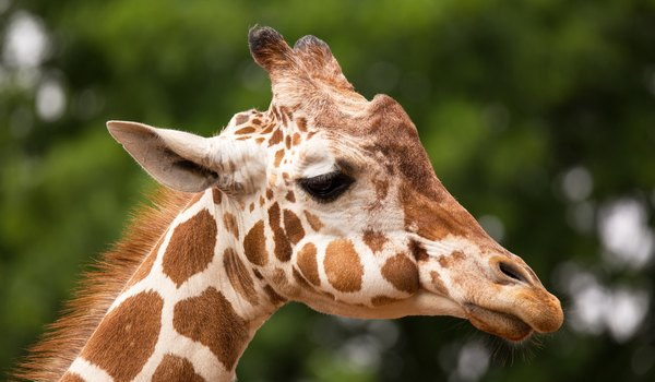 Does Every Giraffe Have Their Own Pattern of Spots?