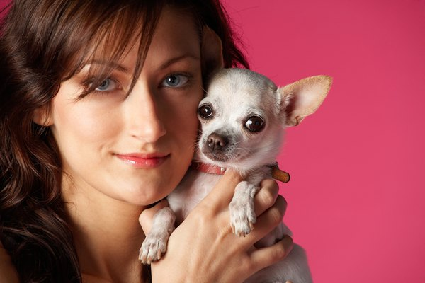Studio portrait of woman with chihuahua