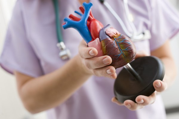 Nurse with Anatomical Model of Human Heart