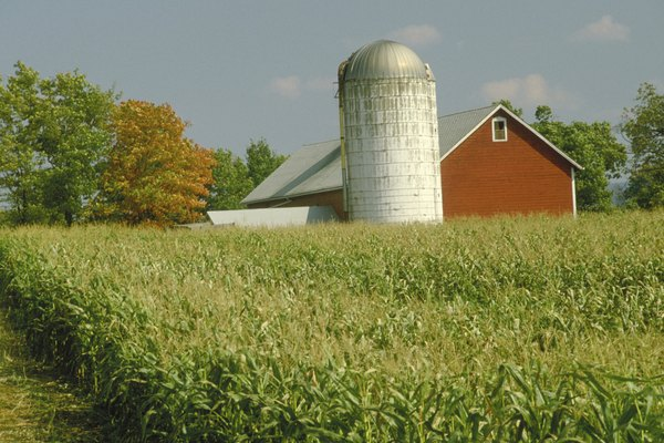 Barn and silo on farm