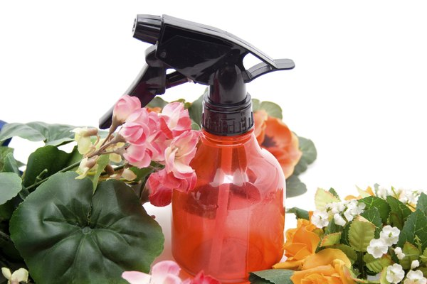 Geraniums and spray bottle