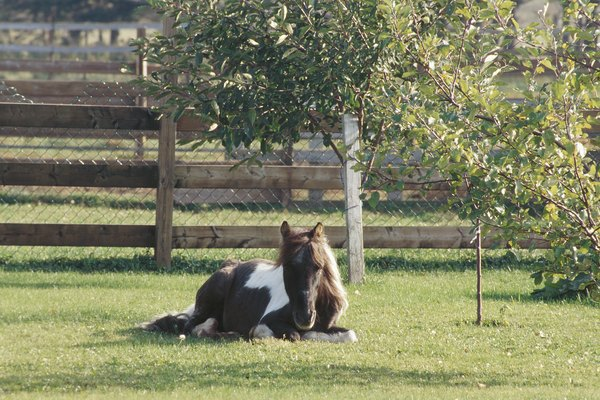 Pony lying in grass