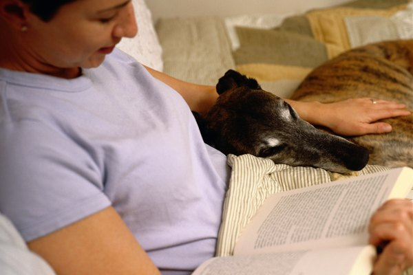 Woman in Bed with Book and Greyhound Dog
