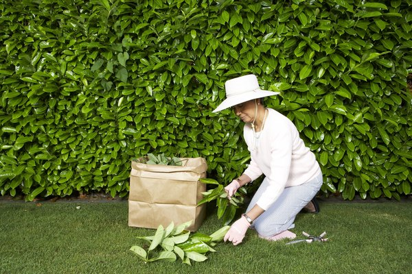 Mature woman doing yardwork