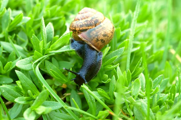 the snail creeps on a green grass