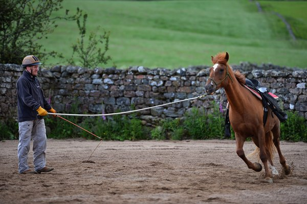 Former Servicemen Learn Horsemanship Skills To Aid Their Recovery With The Help Of HorseBack UK