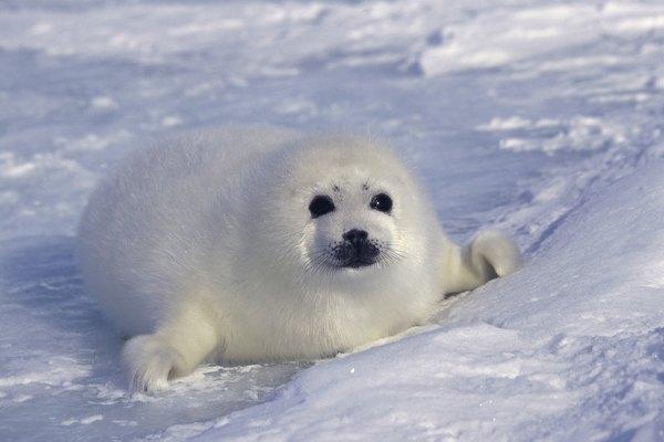 Difference Between Land Animals & Sea Animals | Animals - mom.me