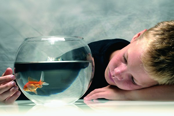 Photo, boy with his head resting on a table looking at goldfish, Color, High res
