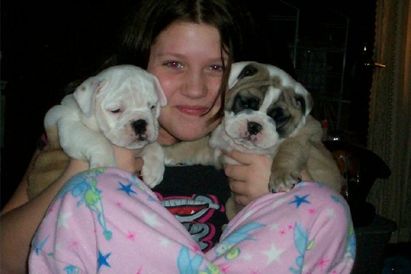 english bulldog puppies for sale without papers British bulldog puppies for sale from ankc registered fixed price of $5000 includes pedigree papers, not available to breeders without a show history and.