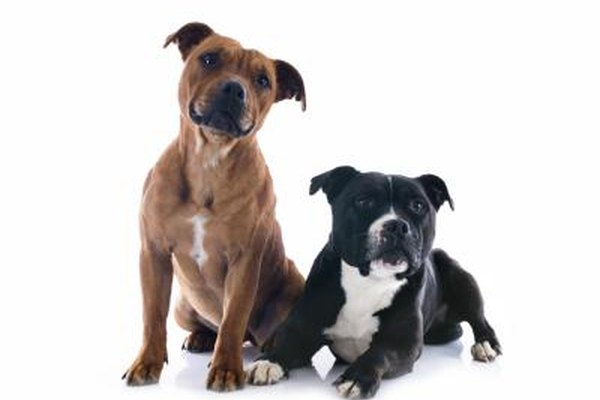 Female Dogs How Likely Are They To Fight