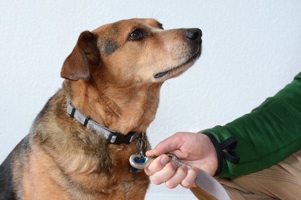 Treats Ok For Dogs On A C D Diet