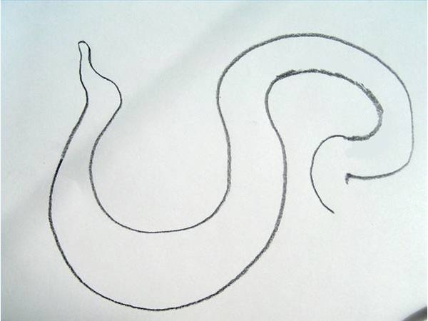 Draw the body of the diamondback rattlesnake.