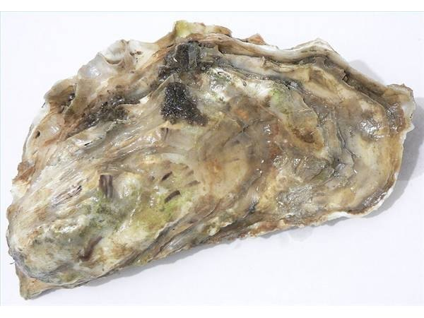Oyster from Marennes-Oléron, France, David Monniaux, 01/06, Wikicommon