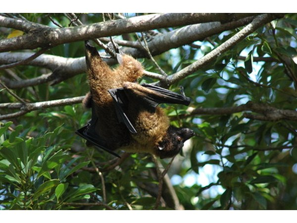 Bat guano can be used in home gardening as a natural fertilizer.
