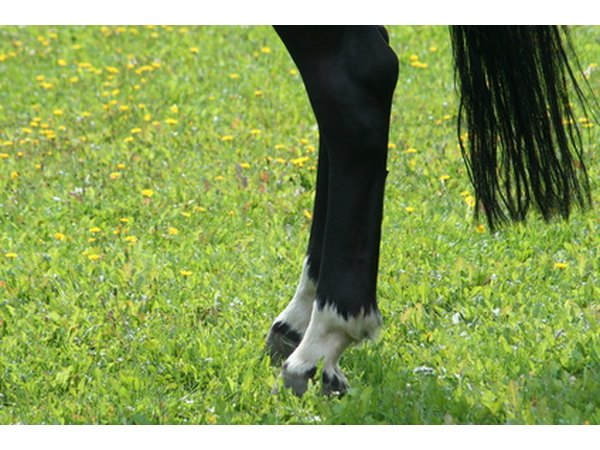 Check for an elevated digital pulse at the fetlock joint.