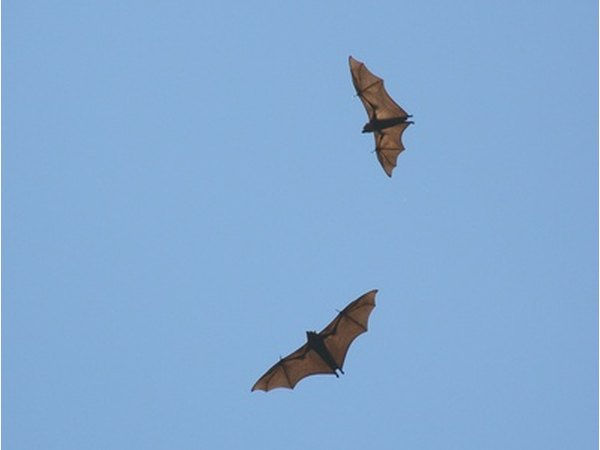 We can help keep the bat population alive by taking several precautions.