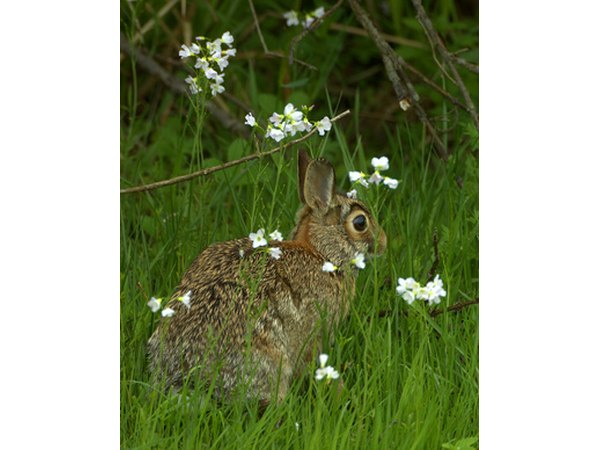 Rabbits are common primary consumers in deciduous forests.
