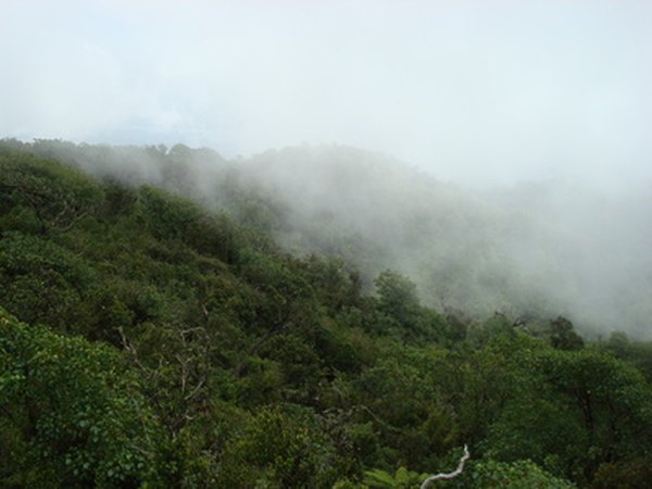 About 30 acres of tropical rainforests are cut down every minute.