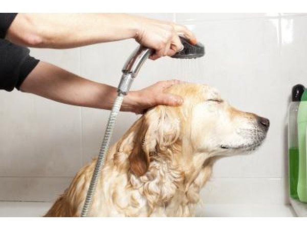 Dog getting bath