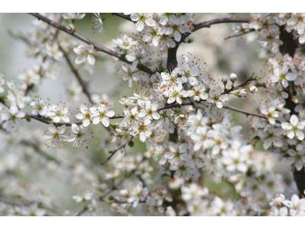 Midwest Jardinería: Flores todo el año