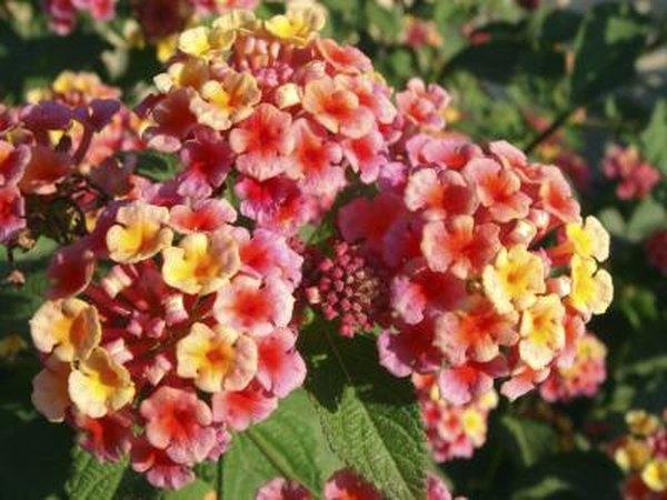 10. Disfrute del color durante todo el año - 10 mejores ideas de paisajismo - Southern Living